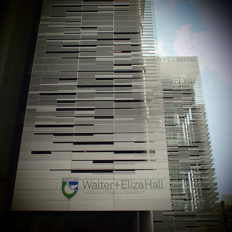 Walter And Eliza Hall Institute Of Medical Research | 1G Royal Parade, Parkville, Victoria 3052 | +61 3 9345 2555