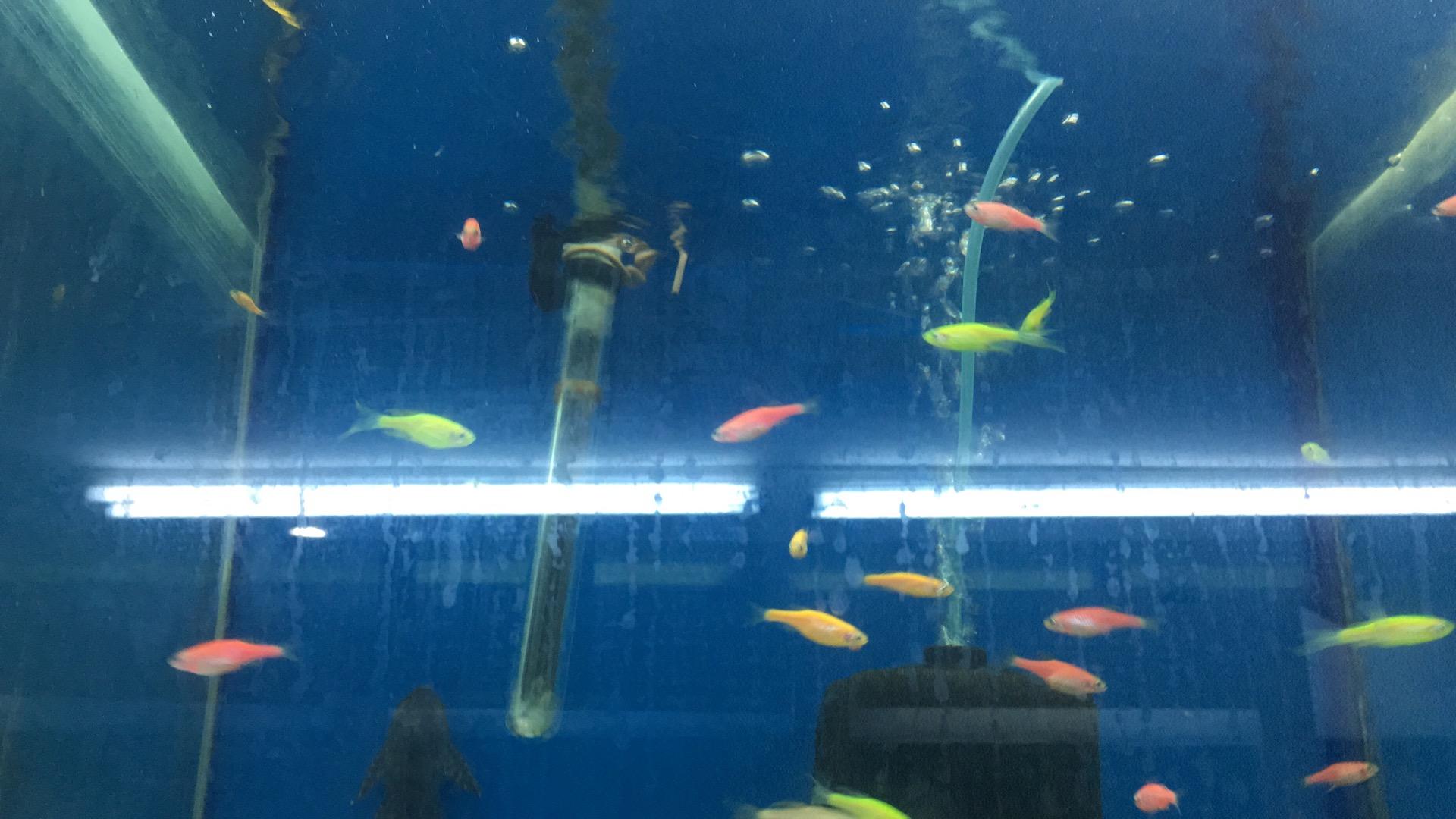 Denizli Elit Akvaryum Petshop Kibrissehitleri Subesi Istiklal Kibris Sehitleri Caddesi 20150 Pamukkale Denizli