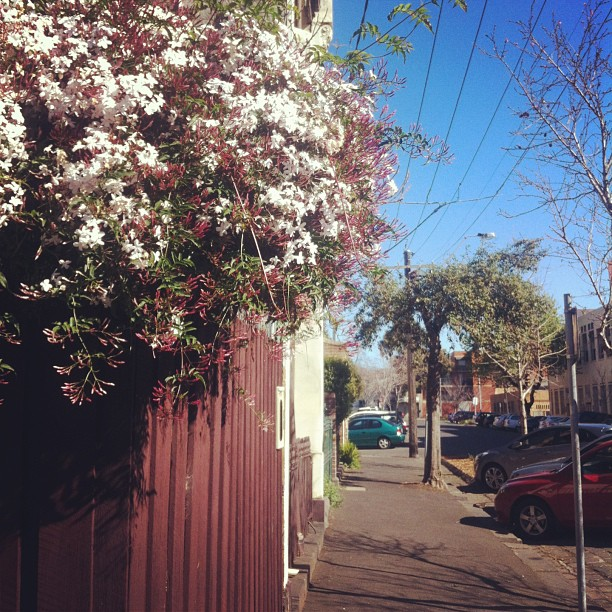 The Southern School of Natural Therapies | 25 Victoria Street, Fitzroy, Victoria 3065 | +61 3 9415 3333