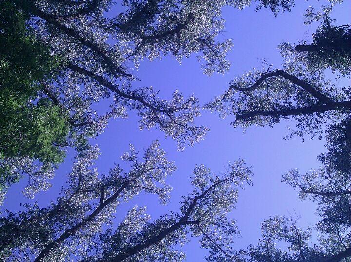 My Sacred Grove